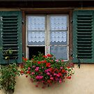 Window and Geraniums by Yair Karelic
