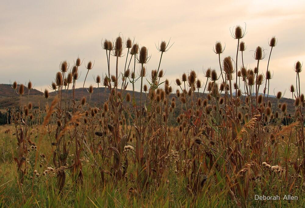 Autumn Weeds by Deborah  Allen
