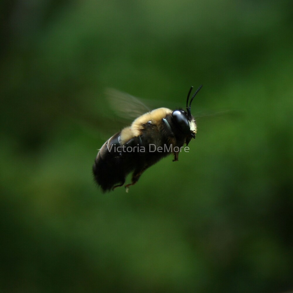Buzzy Little Bee by Victoria DeMore