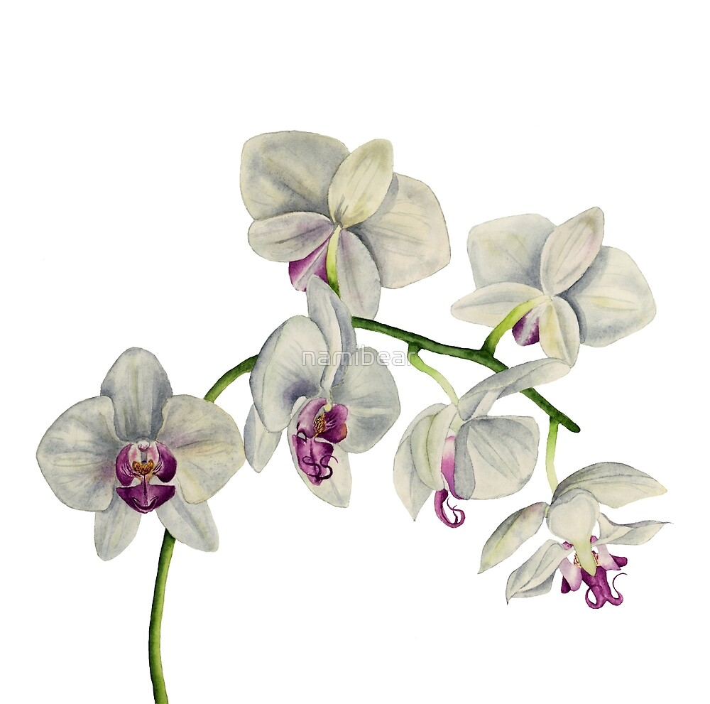 Orchid Watercolor Painting by namibear