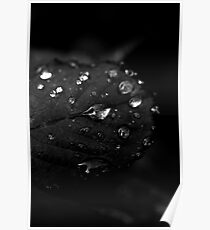 Rain drops on roses Poster