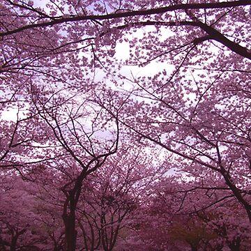 Sakura Cherry Blossoms in Tokyo by FashionHayley