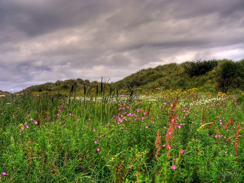 talacre marsh by chasmcn