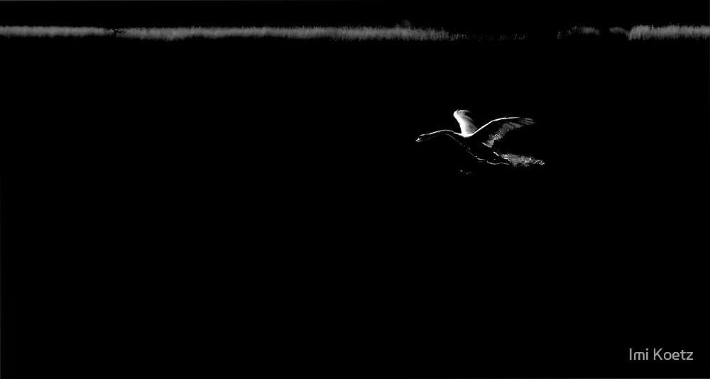 The Swan Lake 2 by Imi Koetz