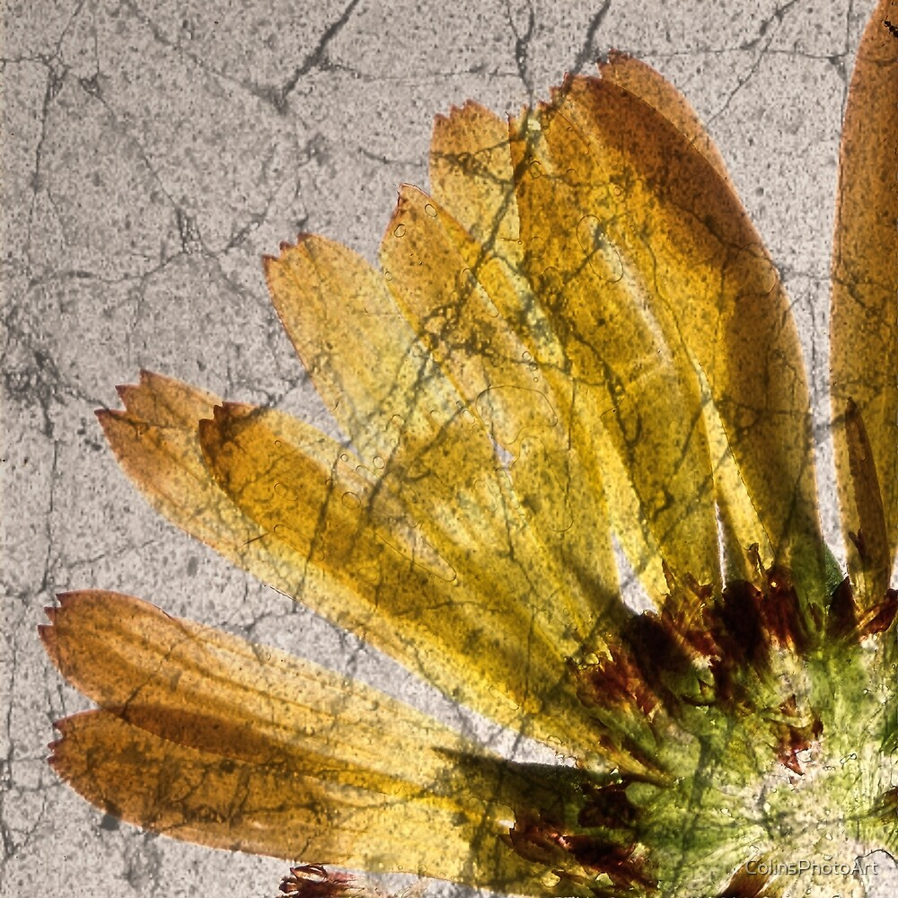 Yellow Flower Abstract Part 1-1 by ColinsPhotoArt
