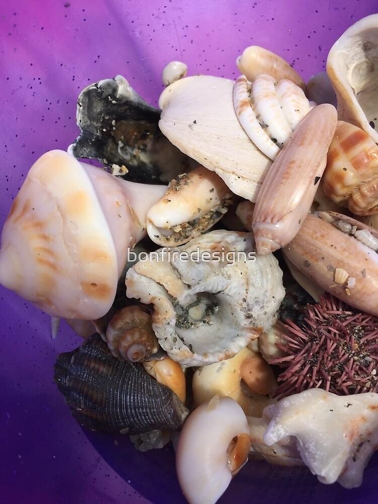 Beachy Sea Shells by bonfiredesigns