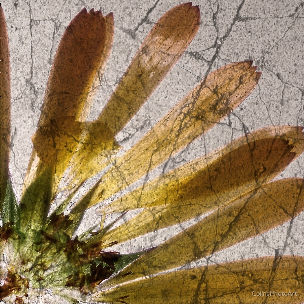 Yellow Flower Abstract Part 1-2 by ColinsPhotoArt