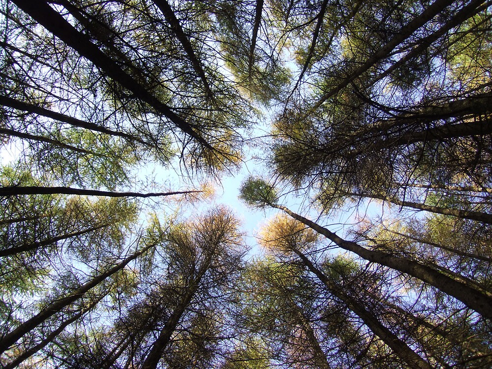 Large Trees by Samuel Fletcher