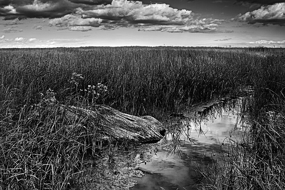Wood In The Marsh by Dave Godden