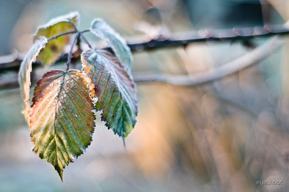 The Breath of Autumn by eyeshoot