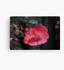 Beefsteak Fungus. Canvas Print
