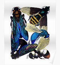 Vintage bees, hornets, wasps nature illustration Poster