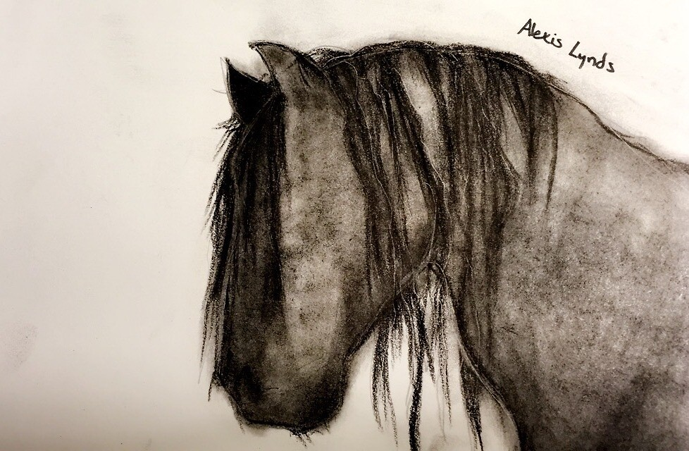 charcoal horse by Alynds14