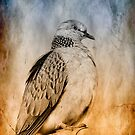 Dove portrait 1321 by kevin chippindall