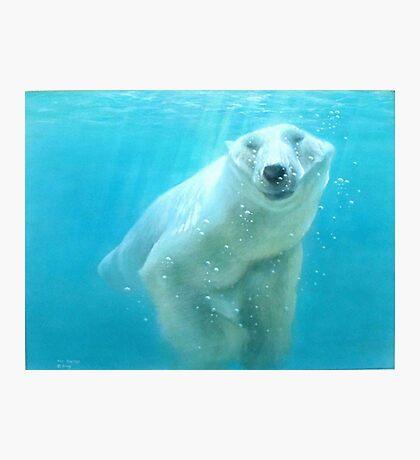 polar bear acrylic Photographic Print