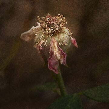Rust 'n Roses #20 by RosalieDale