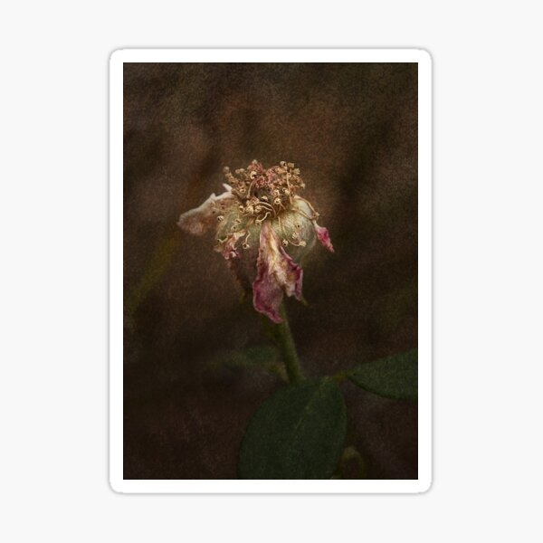 Rust 'n Roses #20 Sticker