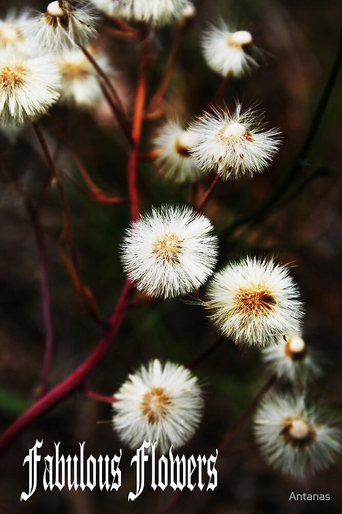 Fabulous flowers by Antanas