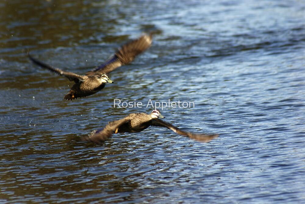 Fly away by Rosie Appleton