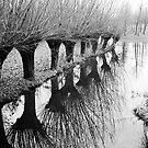 Frozen Willows by VanOostrum