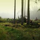 Fog in the forest in Sunrise (My forest) by Antanas