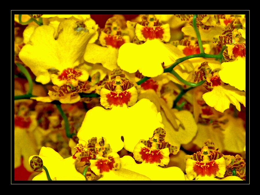 Yellow Orchid by satwant