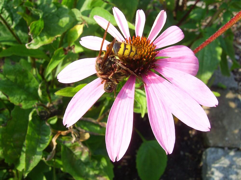 Bee atacking by a wasp by alaskaman53