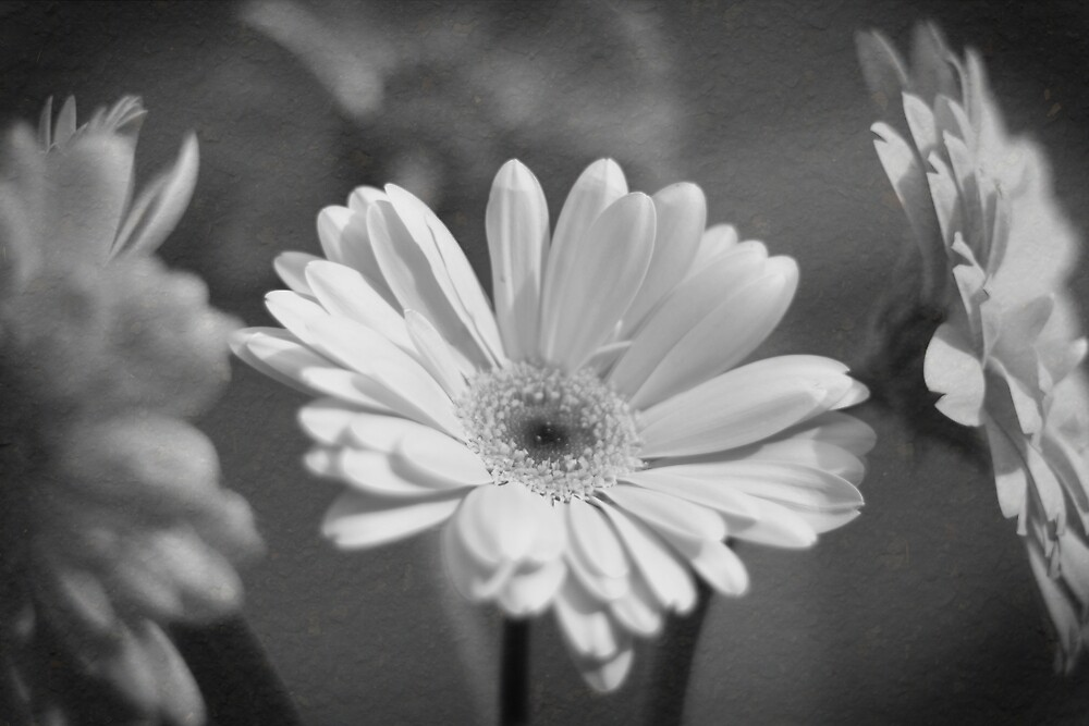 Life In A Flower by Ryan Nowell