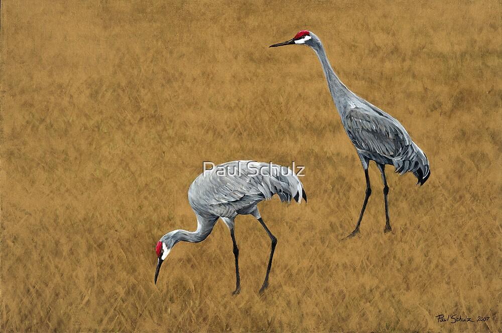 Sandhill Cranes by Paul Schulz