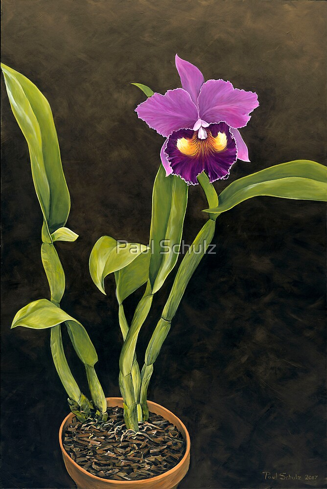Orchid by Paul Schulz