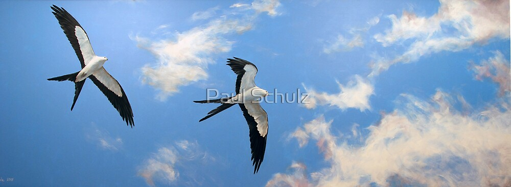 Swallowtail Kites by Paul Schulz