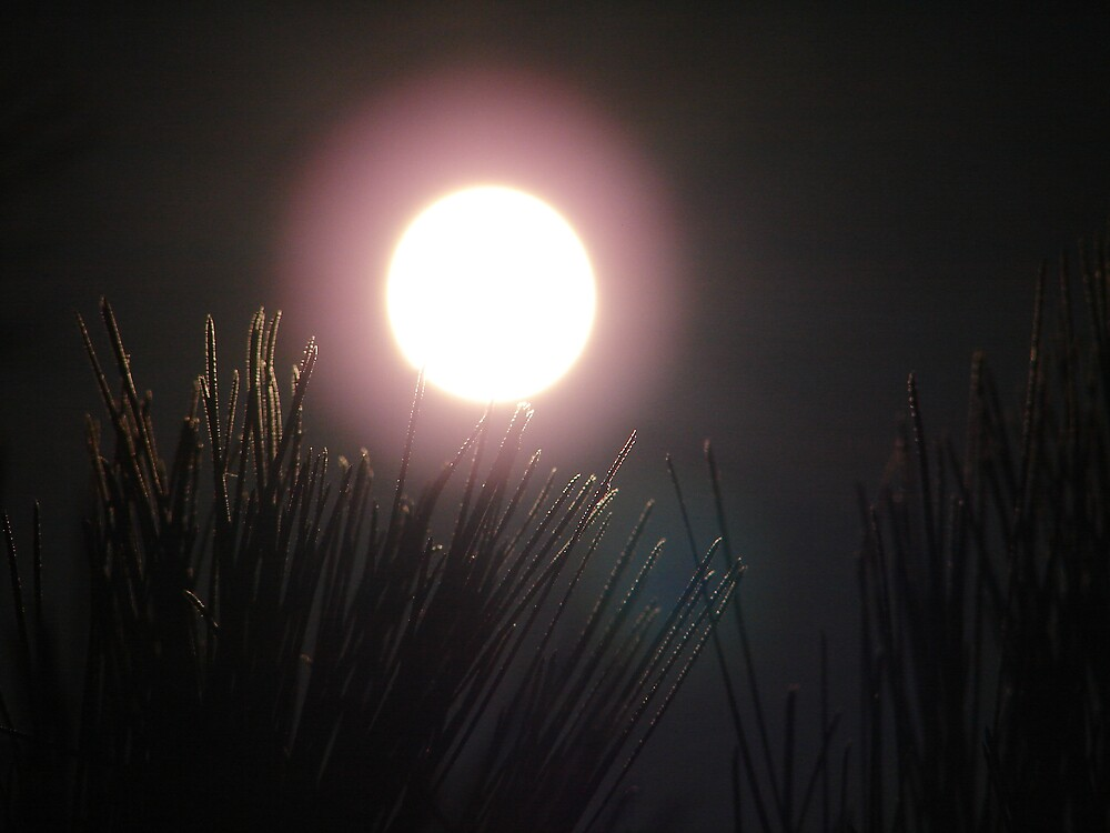 Pinetree By Moonlight by www4gsus