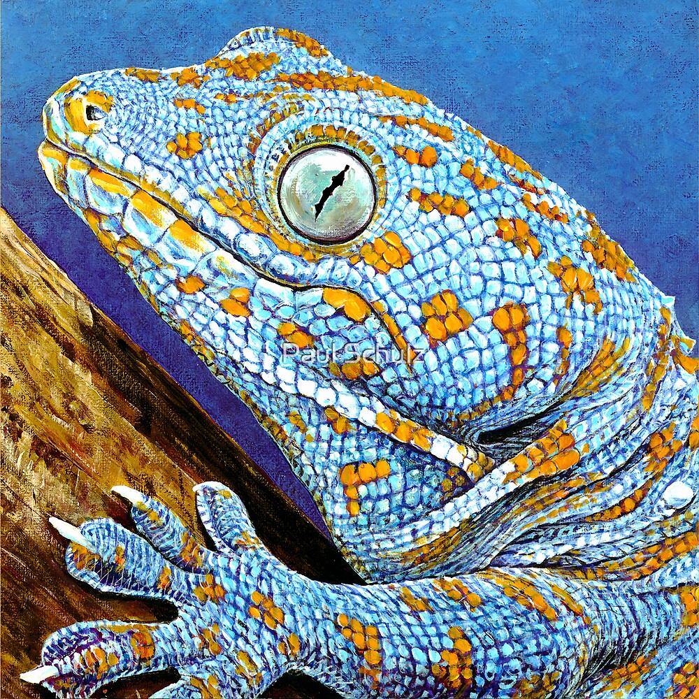 Tokay Gecko by Paul Schulz