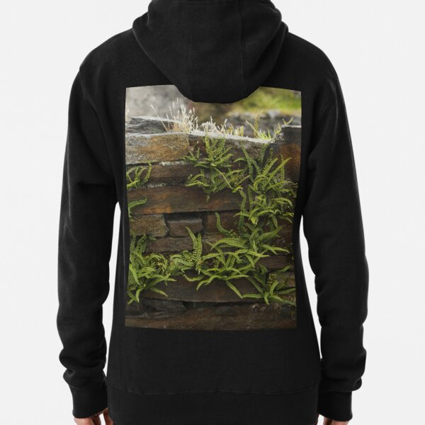 Spleenwort Maidenhair fern on wall at Cashelnagor Pullover Hoodie