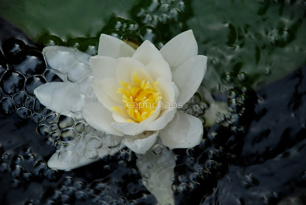 bubbles - pond by Chris Garner