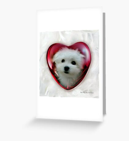 Hermes the Maltese - Valentine Boy ! Greeting Card