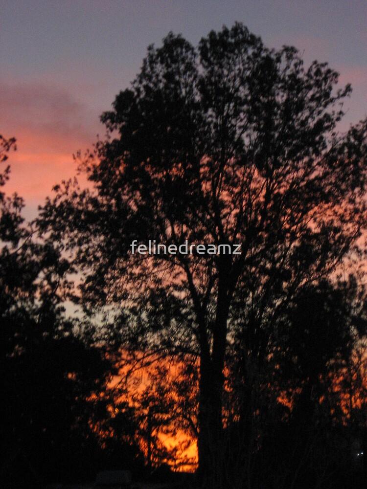 Winter Sunset by felinedreamz