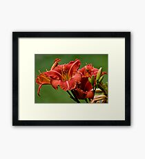 """Raging Wildfire"" Daylily Framed Print"