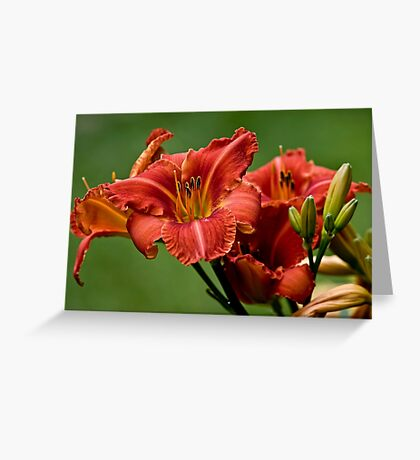 """""""Raging Wildfire"""" Daylily Greeting Card"""