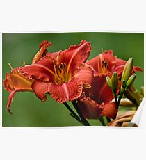 """""""Raging Wildfire"""" Daylily Poster"""