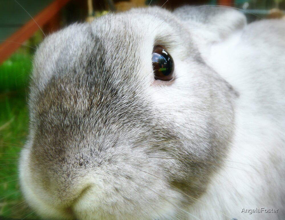 A close up of Clover by AngelaFoster