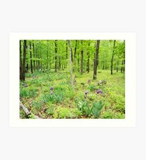 Iris In a Spring Forest Art Print