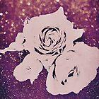 Rose, glänzen, von greenaomi