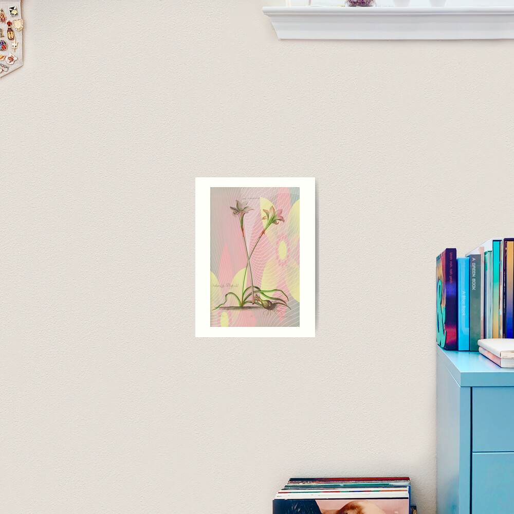 Botanical Print-Indian Lily Daffodil Art Print