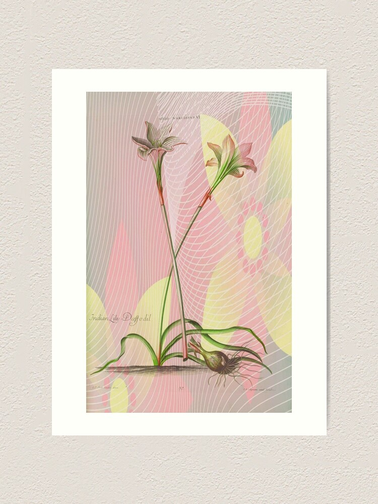 Alternate view of Botanical Print-Indian Lily Daffodil Art Print