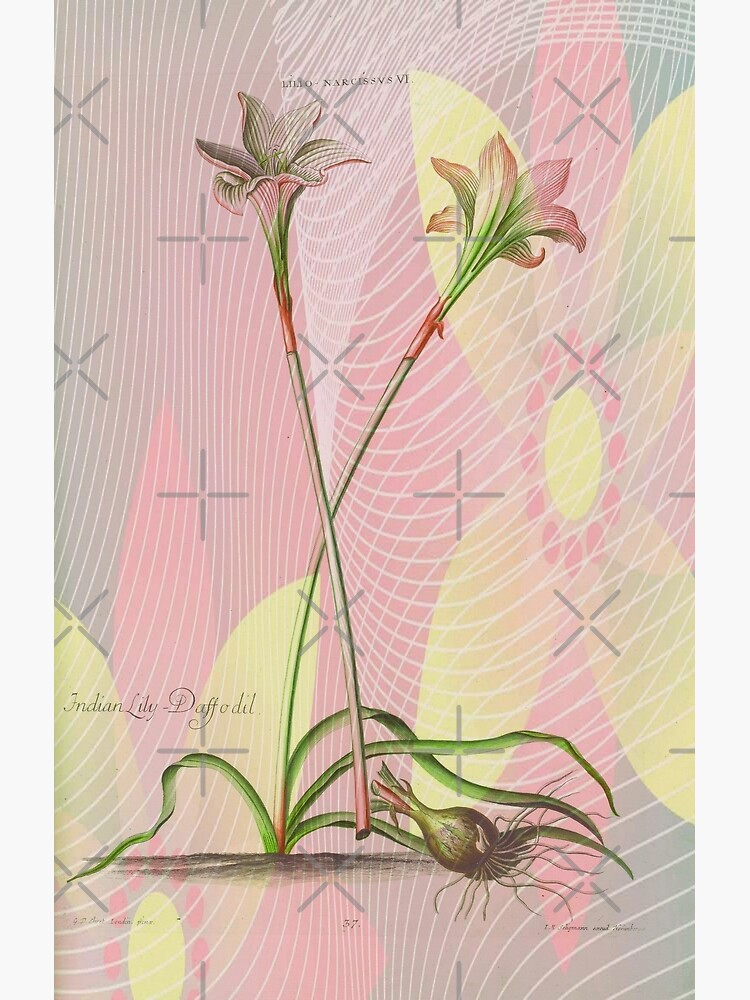 Botanical Print-Indian Lily Daffodil by Matlgirl