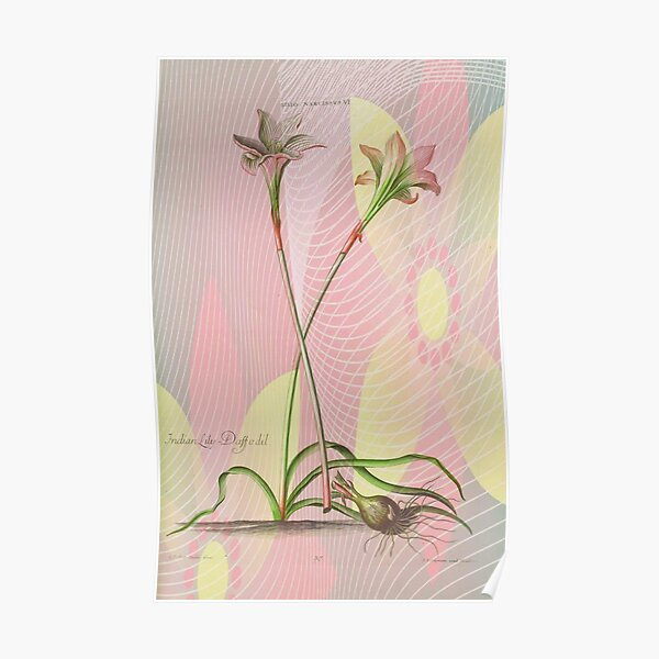 Botanical Print-Indian Lily Daffodil Poster