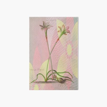 Botanical Print-Indian Lily Daffodil Art Board Print