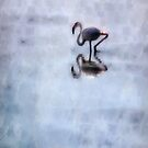 Flamingo Walking In Heather Water by taiche