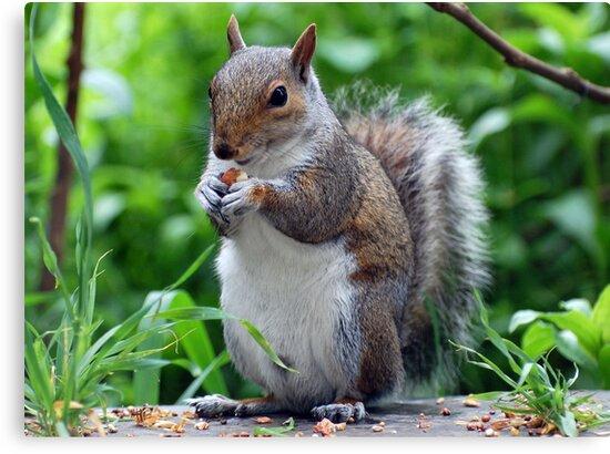 My nut by widge